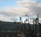 corbeau au balcon..
