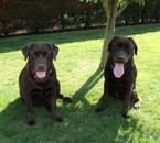Caline(gauche) / Holly(droite)