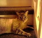 Mozart dans les escaliers.