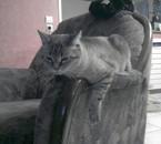 Mozart sur le fauteuil.