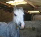 mes poneys préférés