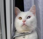 mon petit chat MiMiNE