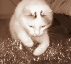my cat <3 <3
