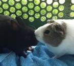 Tsuki et lilou