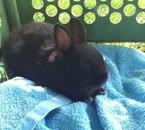 Tsuki le lapin mini nain de mon frère