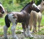 Zoom sur un poulain dans un troupeau de chevaux sauvages