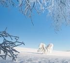 La nature en plein hiver.