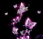 De magnifiques papillons.