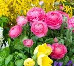 De jolies fleurs.