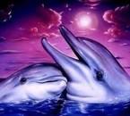 Deux magnifiques dauphins.
