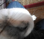 mon lapin (darky)