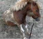 Apache assis ♥