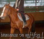 Essaie n°1 pour cheval-schleich006
