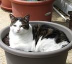 Je plante une patate et c'est un chat qui pousse!!!