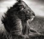 Défendre des animaux sera l'un de mes combats In Shâ Allah ❤