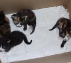 donne bébés chatons femelles et mâles 1 mois
