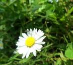 Photo d'après nature
