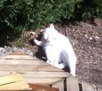 mon chat me manque :(