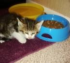 Mon nouveaux chat Dobby :D IL est pas mignon comme ça :D