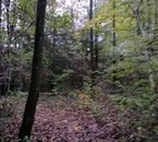 Fée Nynna vit ici, c'est la forêt où elle se ressource.