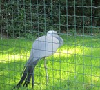 Les photos de la ménagerie du zoo du Jardin des Plantes
