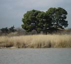 l'étang de l'or à Mauguio 34