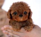 When ever i see a dog i remember canicheiy hhhhhhh Ayaka Yamazaki Bau Billa. Oooo hadouk days hhhh