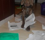 Ma chienne Habby et mon cahier d'Svt mdr x)