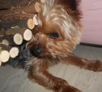 Mon chien , Chocolat