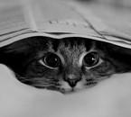 je suis bien cachée ??