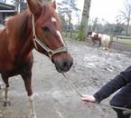 chevaux , vie , centre de Melay