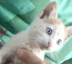 magnifique mon chat je t'aime