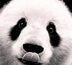 Pandas are The best ♥