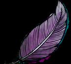 Plume de Raven