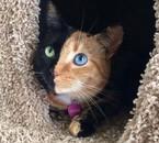 Vénus, la chatte à deux faces