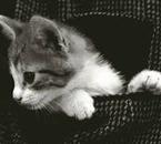c'est mon chat a moi , il s'appel pocket et à bientot 13 ans