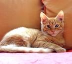 Newton ♥ Et oui, nous sommes proprio' de deux chatons ♥