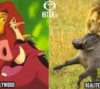 Hollywood vs réalité