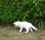 je sais marcher dans l'herbe!!!