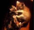mes chatons