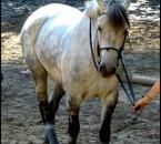 Le best of the Bést , Je t'aiime mon poney d'amouur !