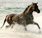 les chevaux je les aime tous sans exeptions