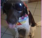 The dog ! <3