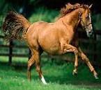 j'adore les chevaux ...