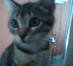 ben mon chat
