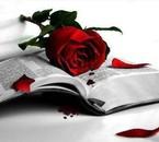 livre et rose fané