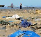 pollution des littorale