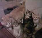 La famille chat il y a 2 bébé qui vont partire normalement
