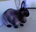 Bunny dans le garage