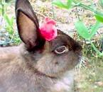 Bunny et sa rose